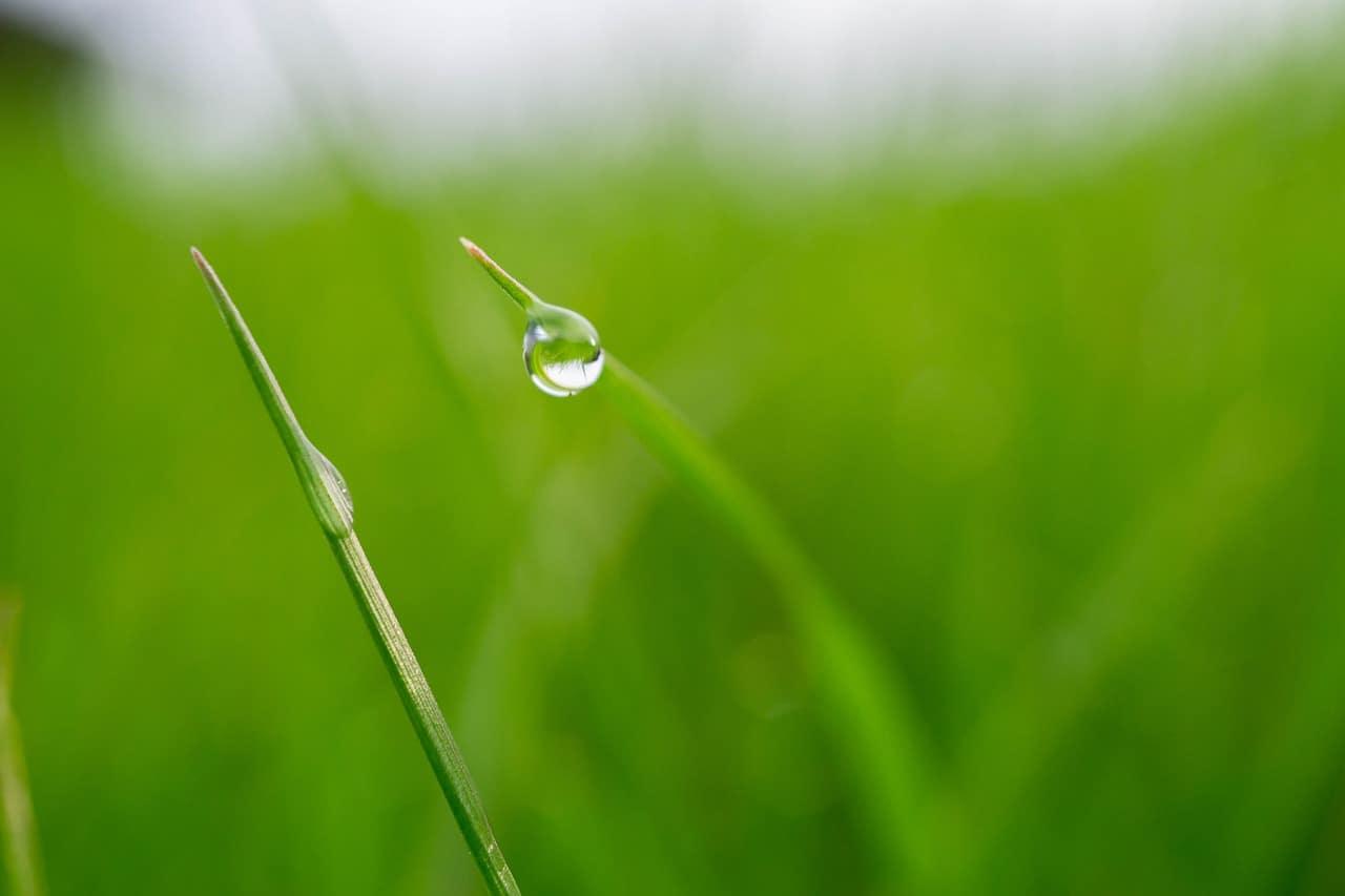 雨上がり、葉