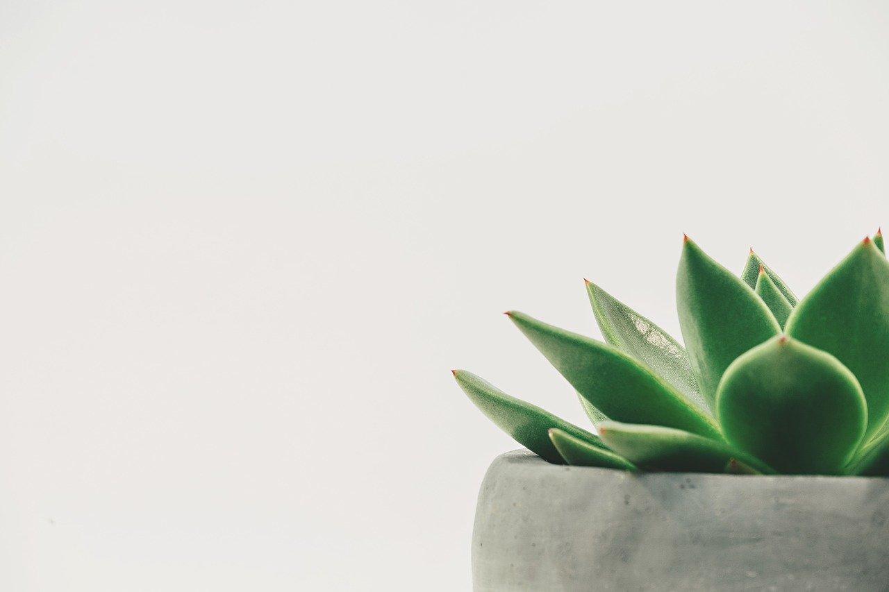 シンプル、植物