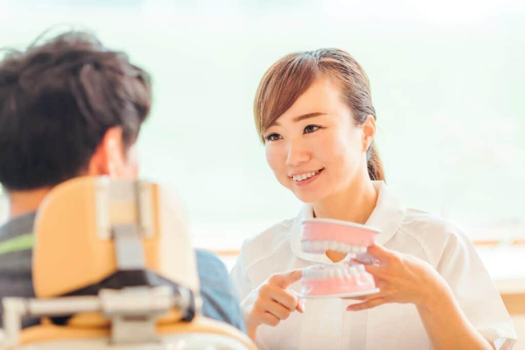 歯の模型を持つ女性