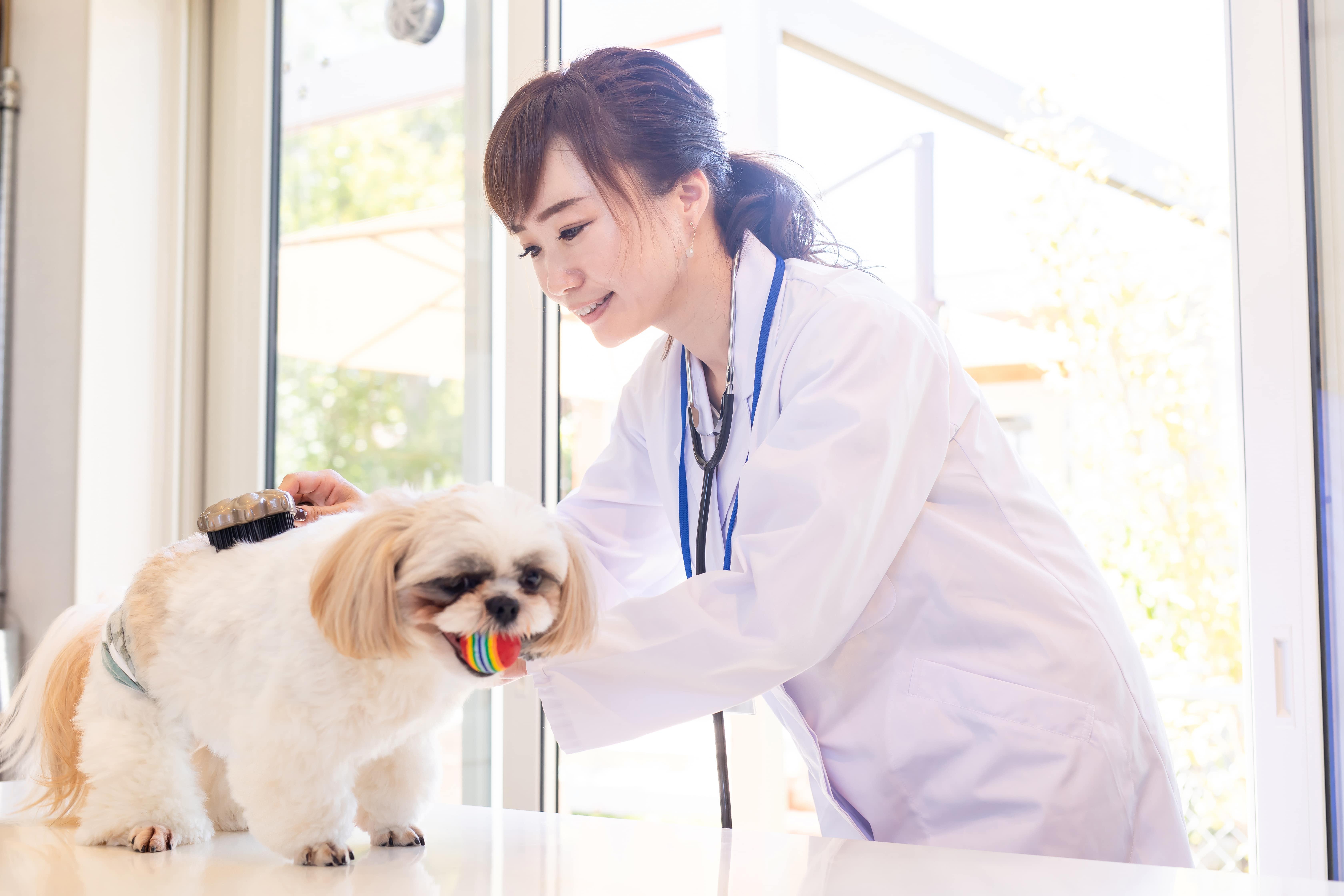 犬を診る獣医