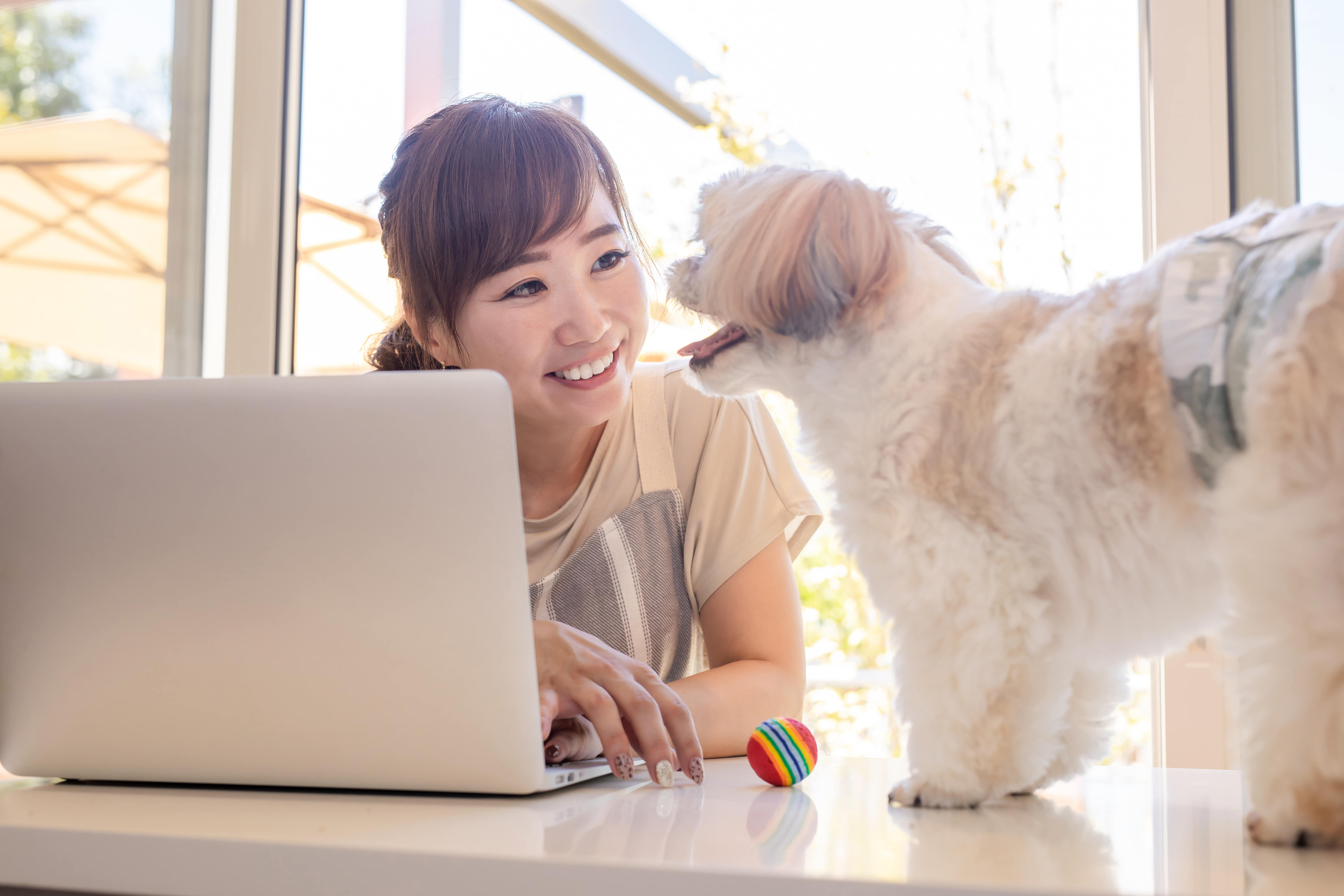 パソコンを触る女性と犬